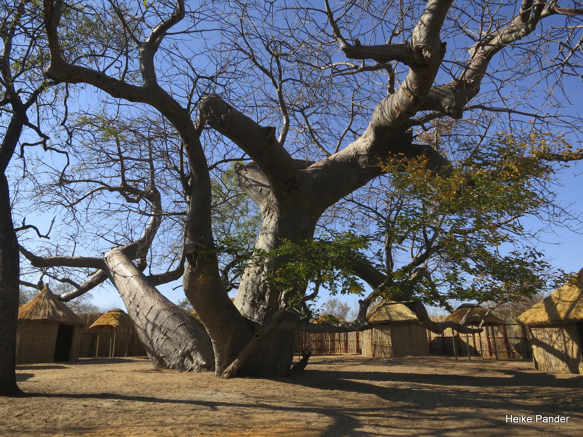 Baobab Twins, Heike Pander