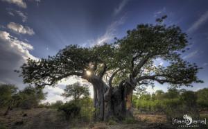 Baobab Sunset, Hans-Juergen Keck
