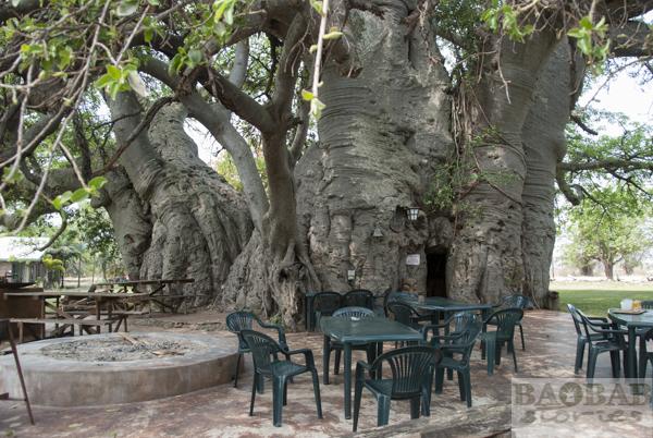 Sunland Baobab, Bar