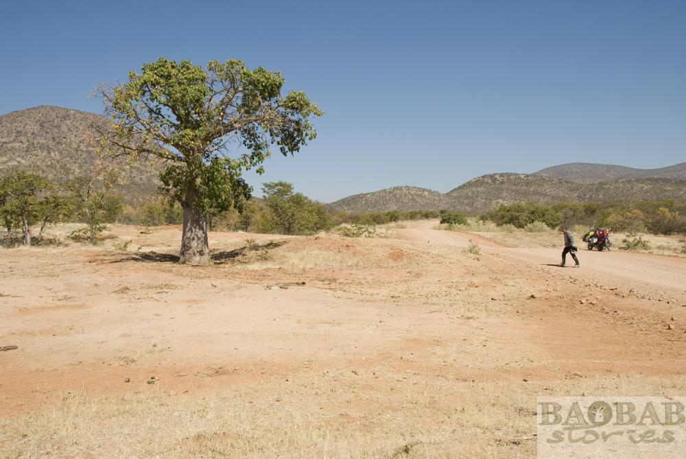 Baobab, Street, Epupa Falls