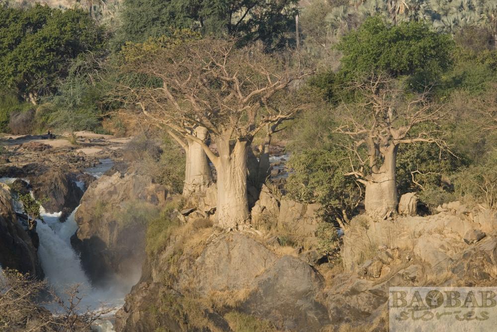 Baobabs, Epupa Falls