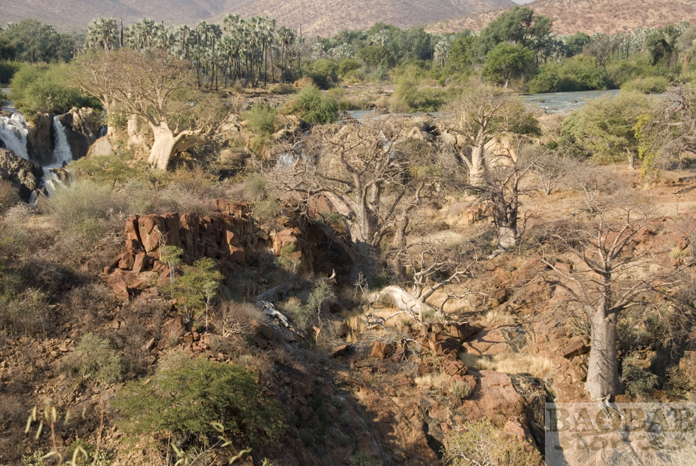 Baobabs at Kunene River, Epupa Falls