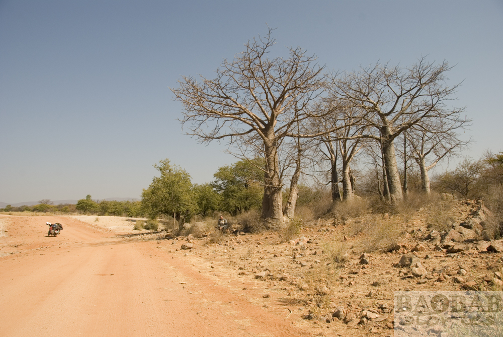 Baobabs, Street, Epupa Falls