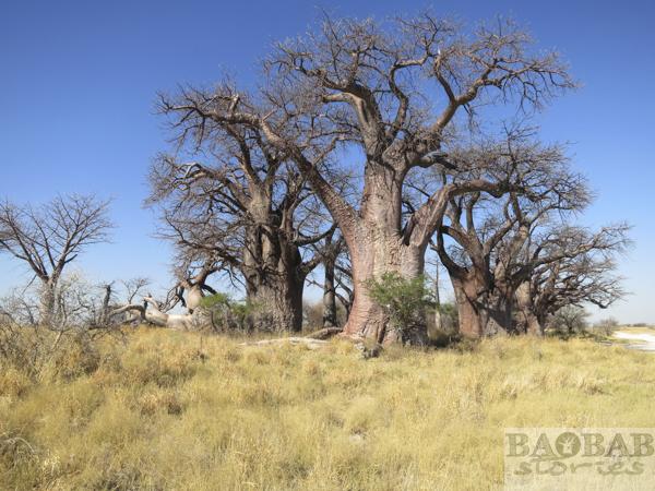Baines Baobabs, Botsuana