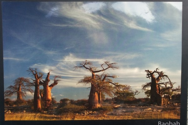 Baobab, Book by Ralph Stutchbury