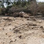 Dead Baobab at Mana Pools