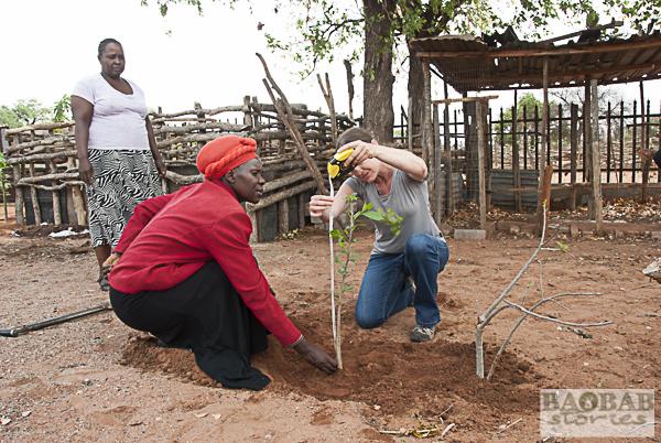 Measuring little Baobab