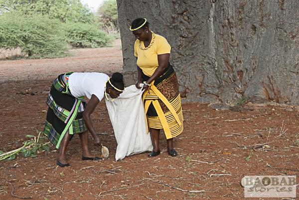 Sylvia Mathoho and Mashudu Rammbasa collecting Baobab Fruit