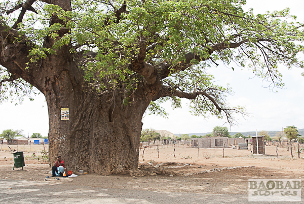 Baobab near the Road, South Africa