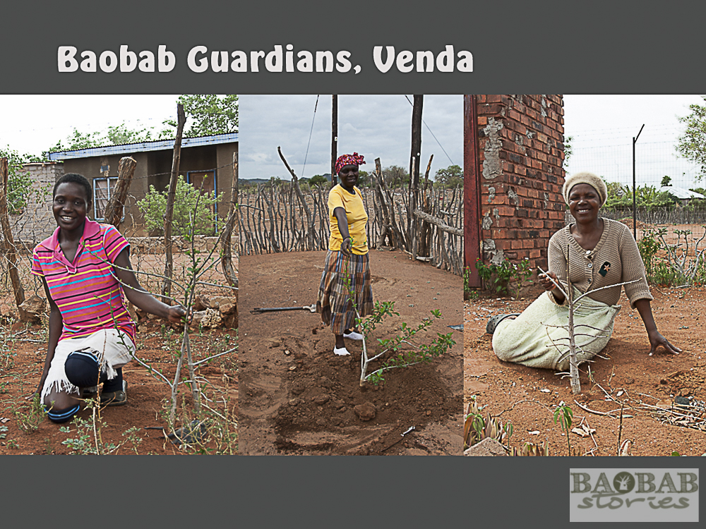 Baobab Guardians, Venda