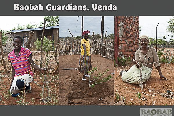 Baobab Guardians, Venda