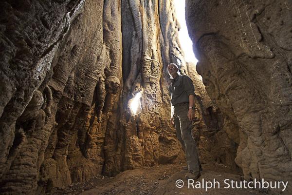 Ralph Stutchbury in a hollow Baobab