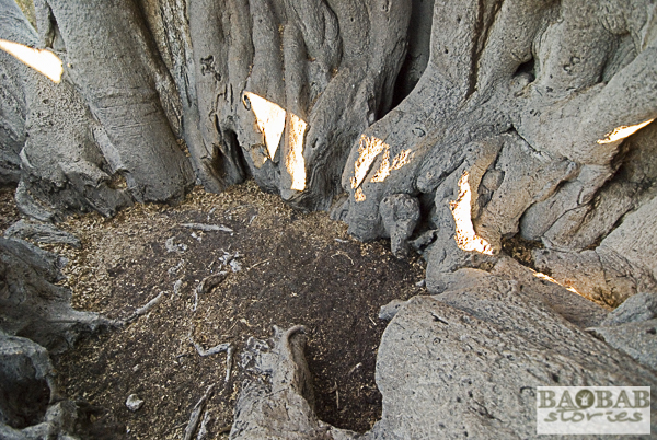 Inside a Hollow Baobab