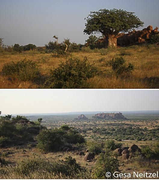 Mashatu, Botswana
