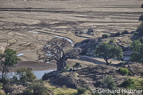 Baobab at Mapungubwe, Gerhard Hübner