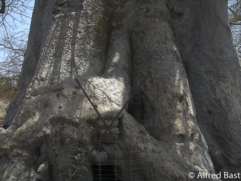 Baobab_Senegal