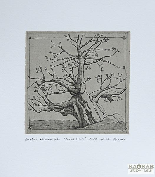 Baobab_Namibia