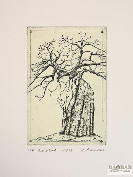 "Baobab ""Africa"""