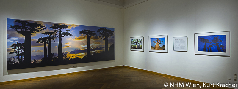 "Baobab photography of Pascal Maître, baobab exhibition ""Baobab - the magic tree"" at NHM, Vienna"