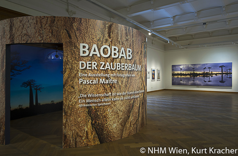 "Baobab construction at baobab exhibition ""Baobab - the magic tree"" at NHM, Vienna with photographs of Pascal Maître"