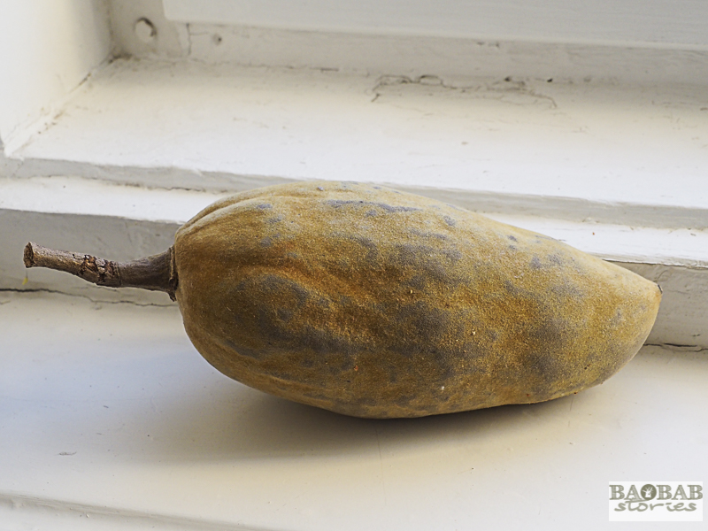Baobab Deko: longish oval baobab fruit, southern African region