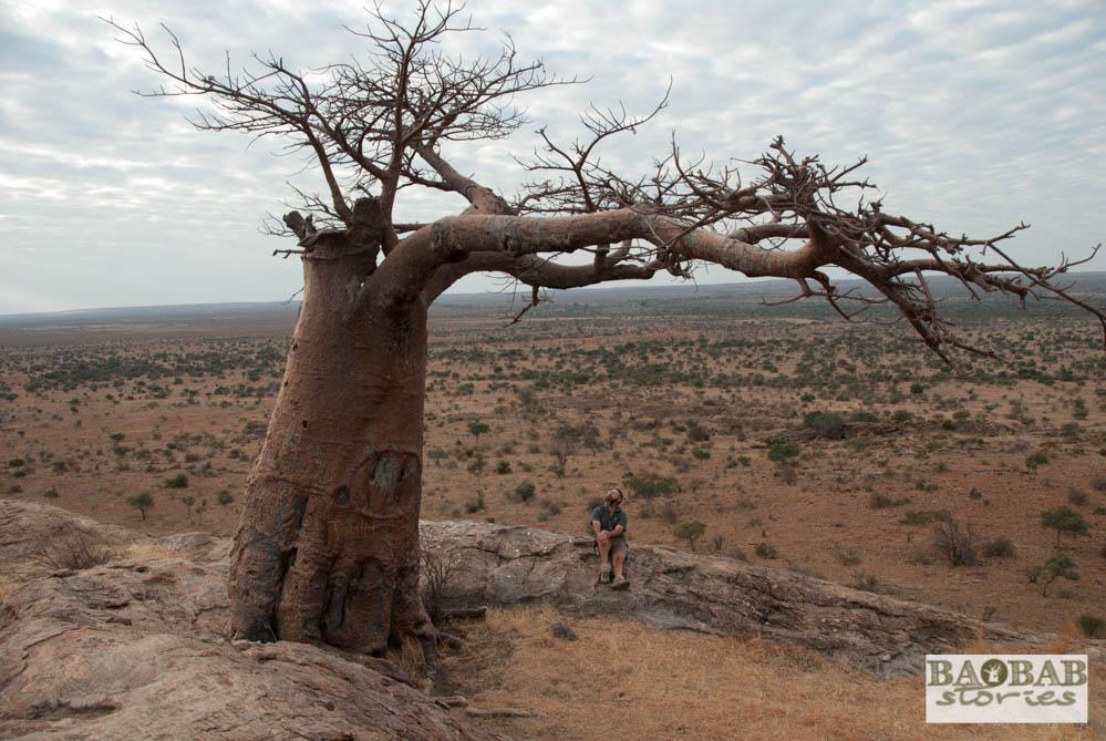 Henry Parsons at Rhodes Baobab, Mashatu, Botswana