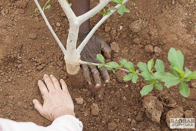Planting a baobab tree together, Zwigodini, South Africa