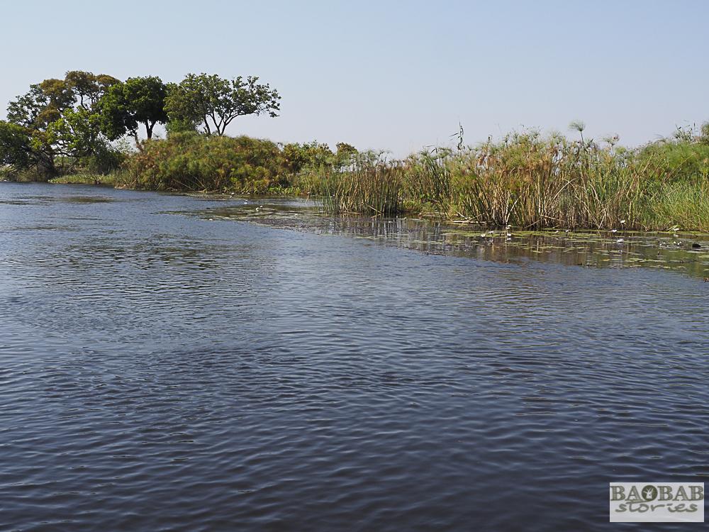 Papyrus, Bwabwata Nationalpark, Namibia, Heike Pander