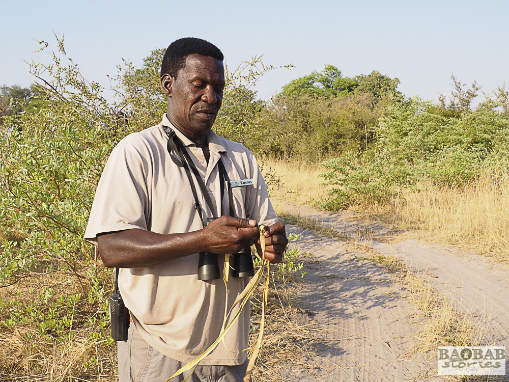 Eustace Libulelo knotting a sling, Bwabwata NP, Namibia, Heike Pander