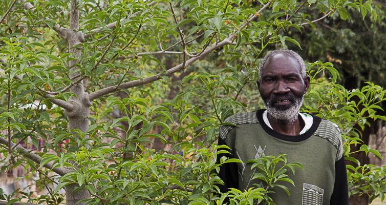 Aaron Nemutshenzheni vor seinem Baobab, Limpopo, Südafrika