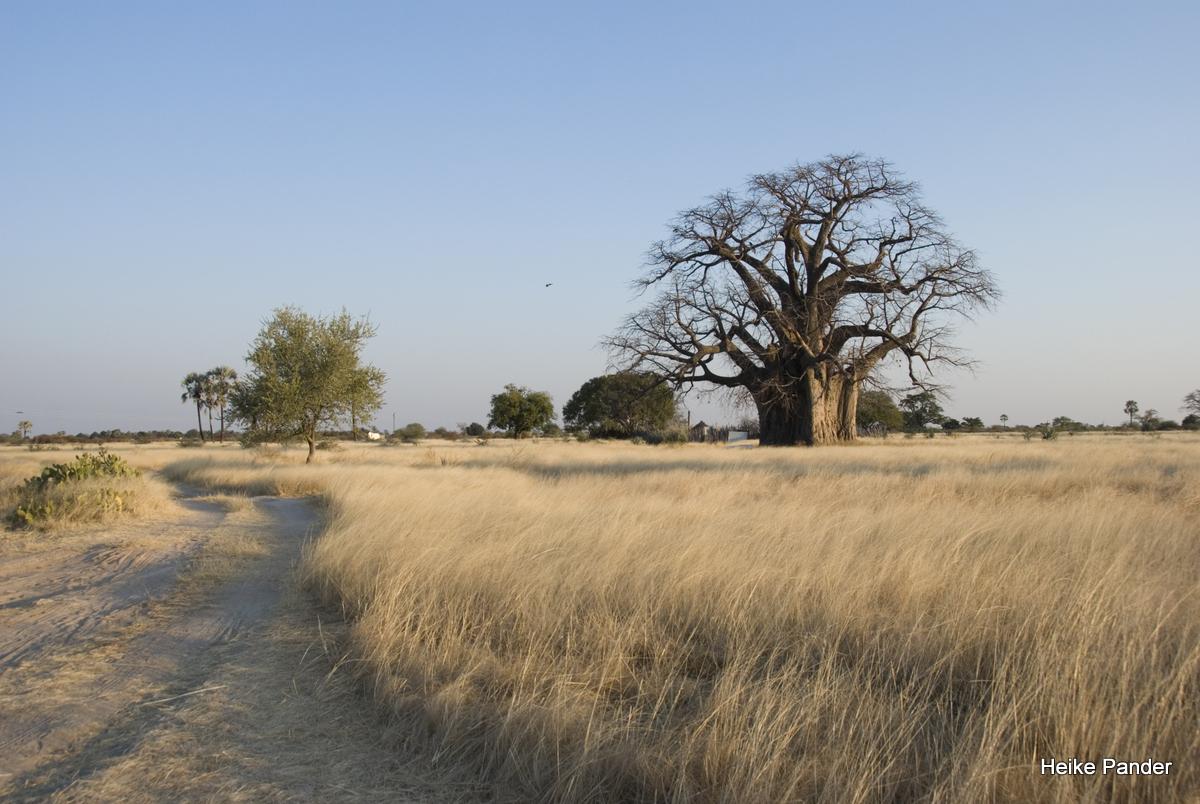 Baobab, Kulturlandschaft, Outapi, Heike Pander