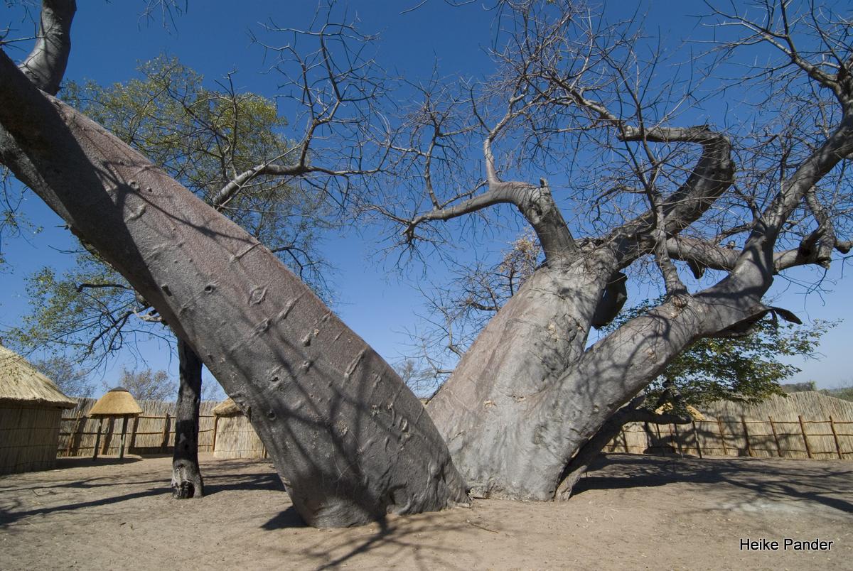 Besonderer Baobab-Standort: Namushasha
