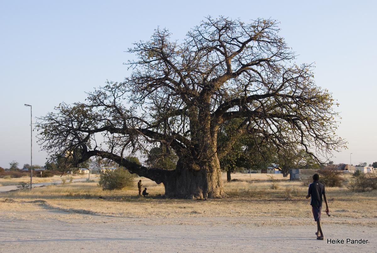 Menschen unterm Baobab, Heike Pander