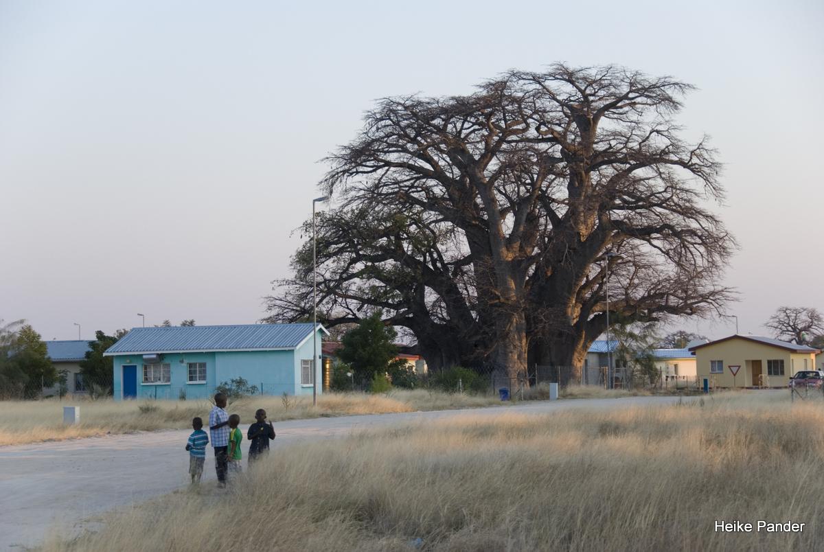 Gigantischer Baobab, Outapi, Heike Pander