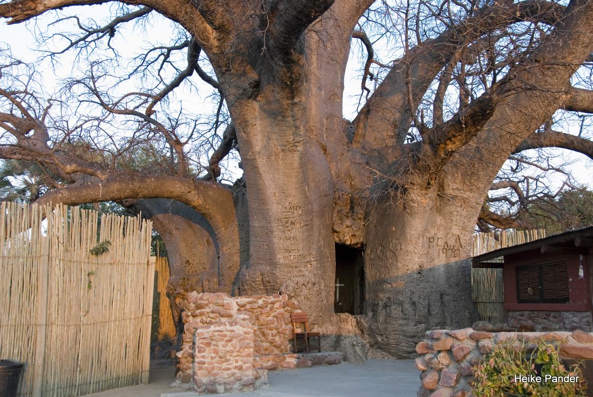 Baobab, Heritage Center, Outapi, Heike Pander