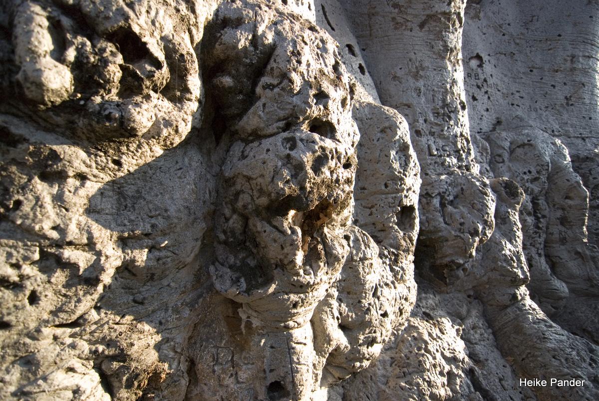 Baobab, Rinde, Heritage Center, Outapi, Heike Pander