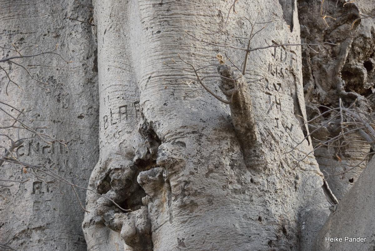 Baobab, Detail, Heritage Center, Heike Pander, Outapi