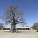 Baobab, Heike Pander