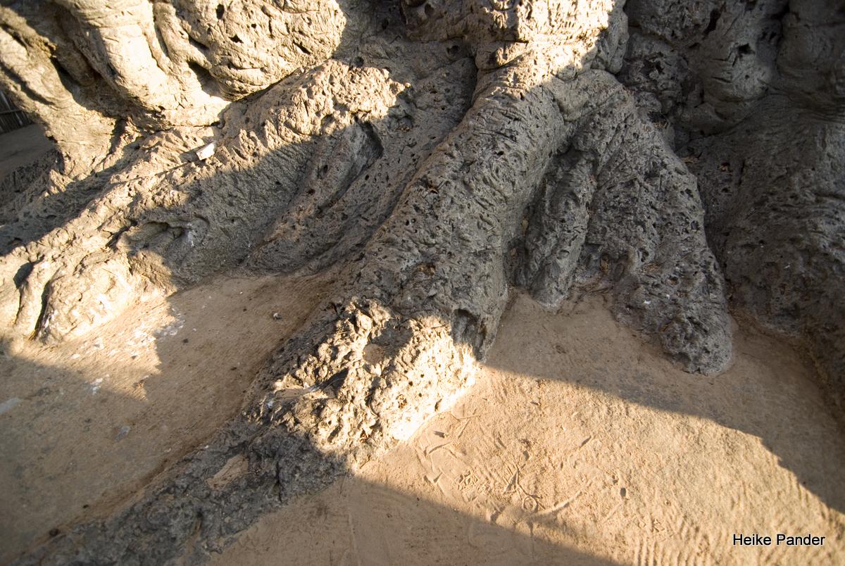 Baobab, Wurzelansicht, Heritage Center, Outapi, Heike Pander