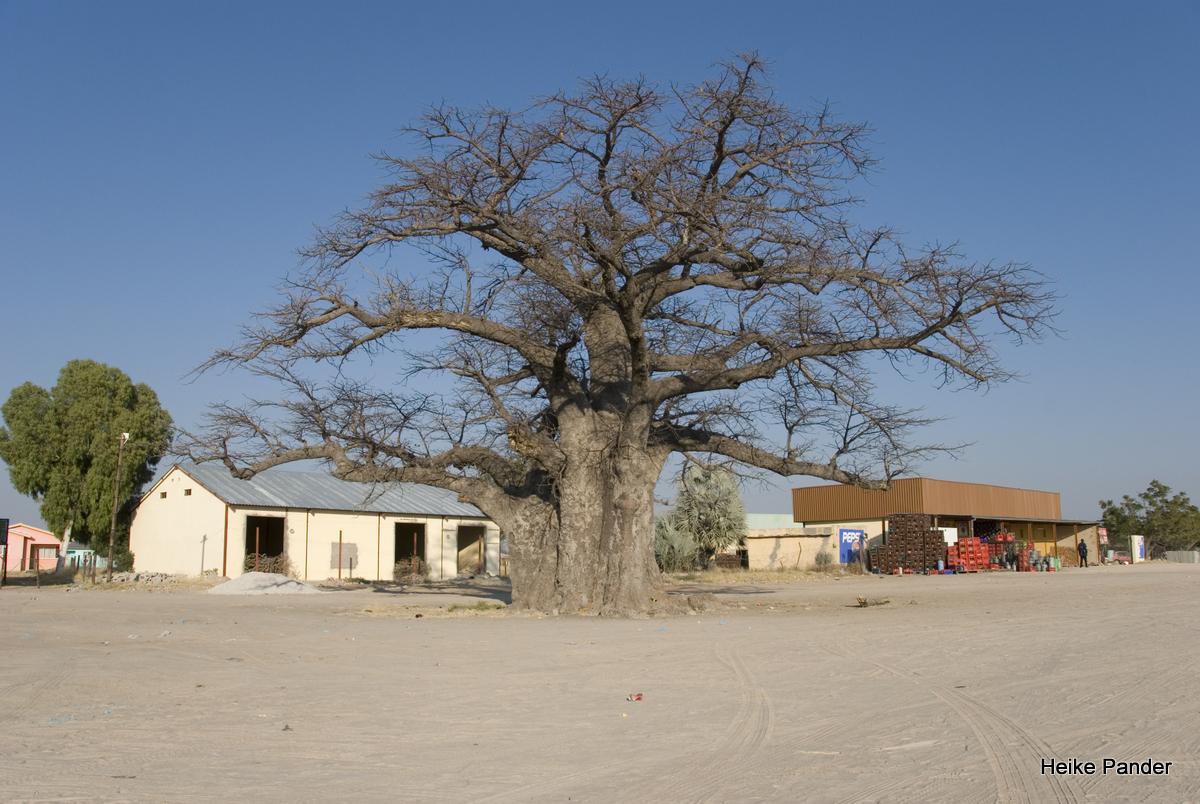 Baobab, Outapi, Heike Pander