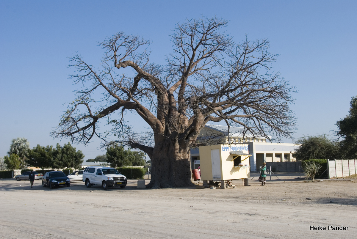 Baobab mit Snackbar, Outapi, Heike Pander