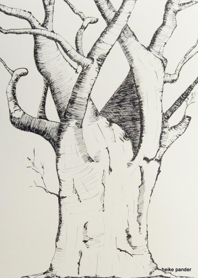 Baobab, Botswana, Tinte auf Papier, Heike Pander, 2013