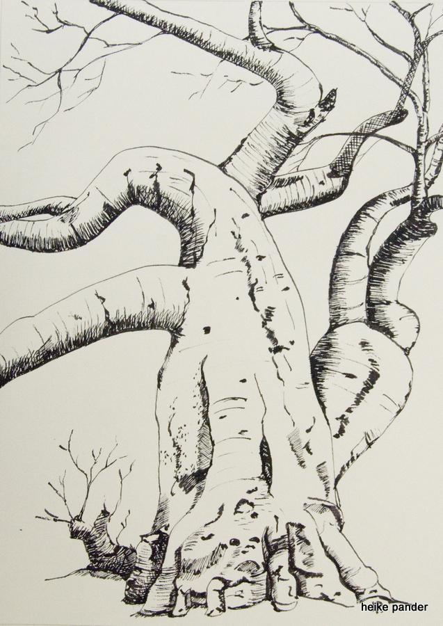 Baobab, Namibia, Tinte auf Papier, Heike Pander, 2013