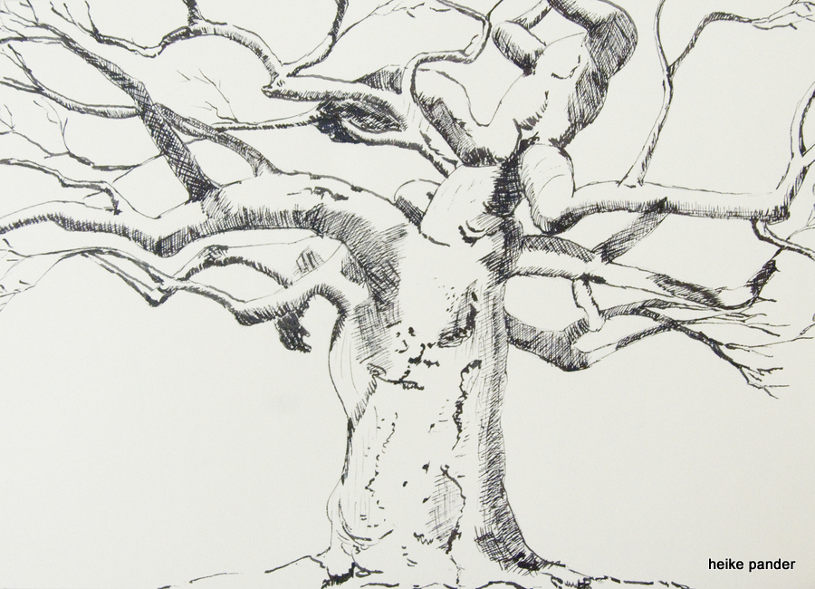 Baobab, Südafrika, Tinte auf Papier, Heike Pander, 2013