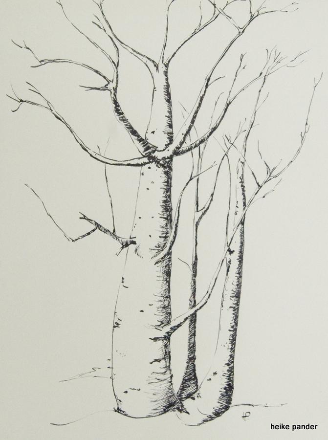 Baobabtrio, Namibia, Tinte auf Papier, Heike Pander, 2013