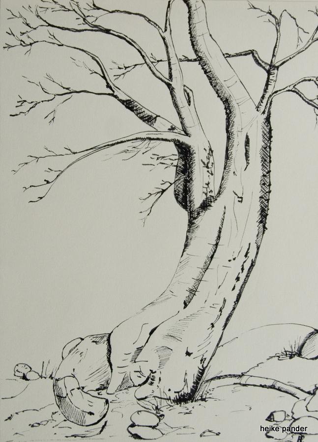 Baobab, Tinte auf Papier, Heike Pander, 2014