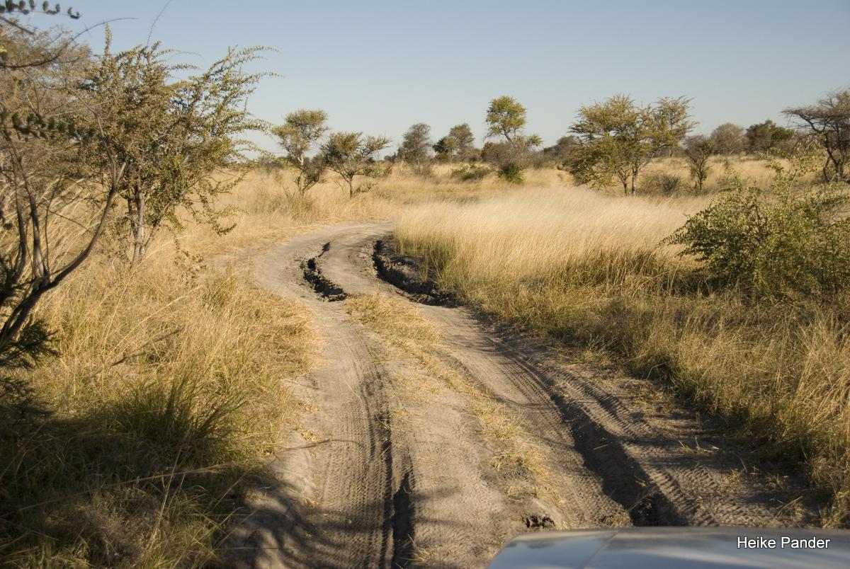 Weg zum Holboom, Tsumkwe, Heike Pander