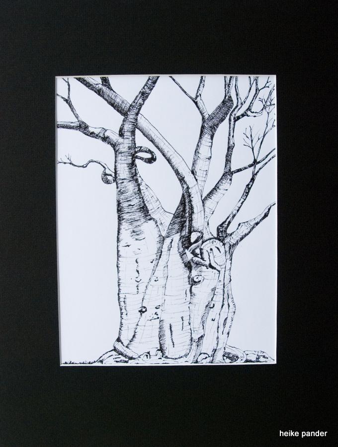 Baobab, Tinte auf Papier, mit Passepartout, Heike Pander, 2013