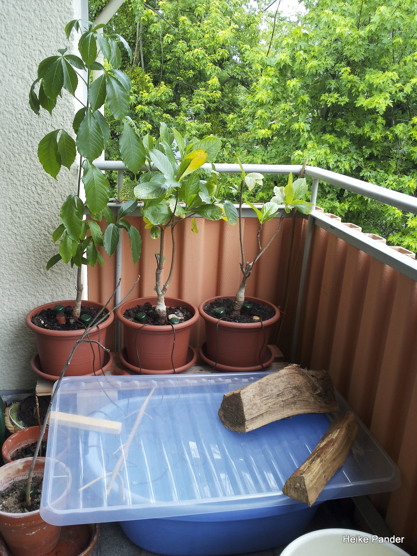 Baobabs_Bewaesserung_1500_280614-0000