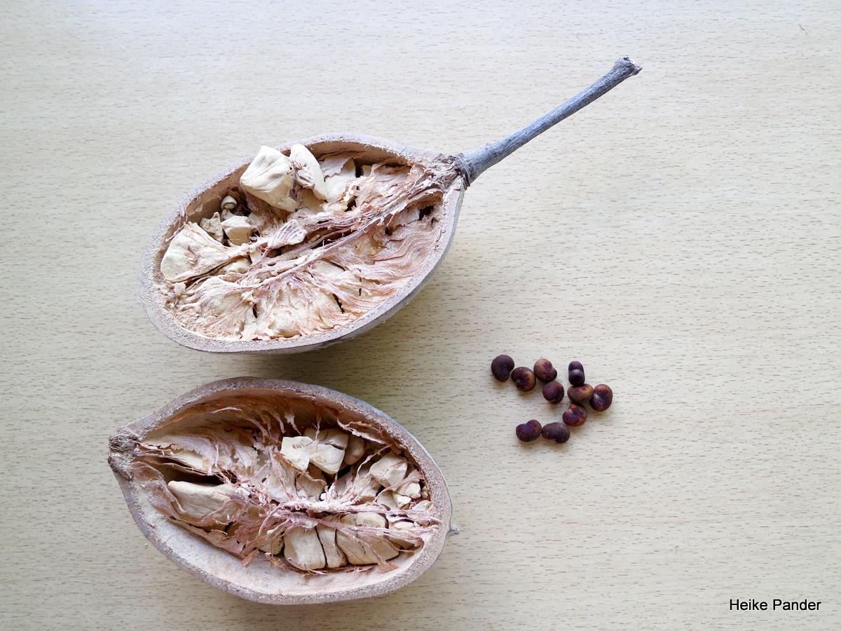 Baobab Samen und Frucht